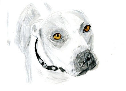 Grey+White Pitbull copy