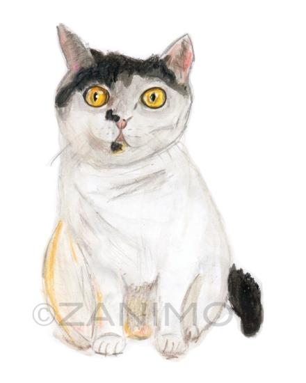 Hortense le chatWM