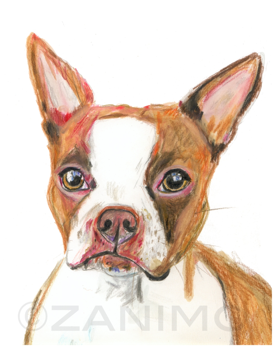 BostonTerrierRedWM