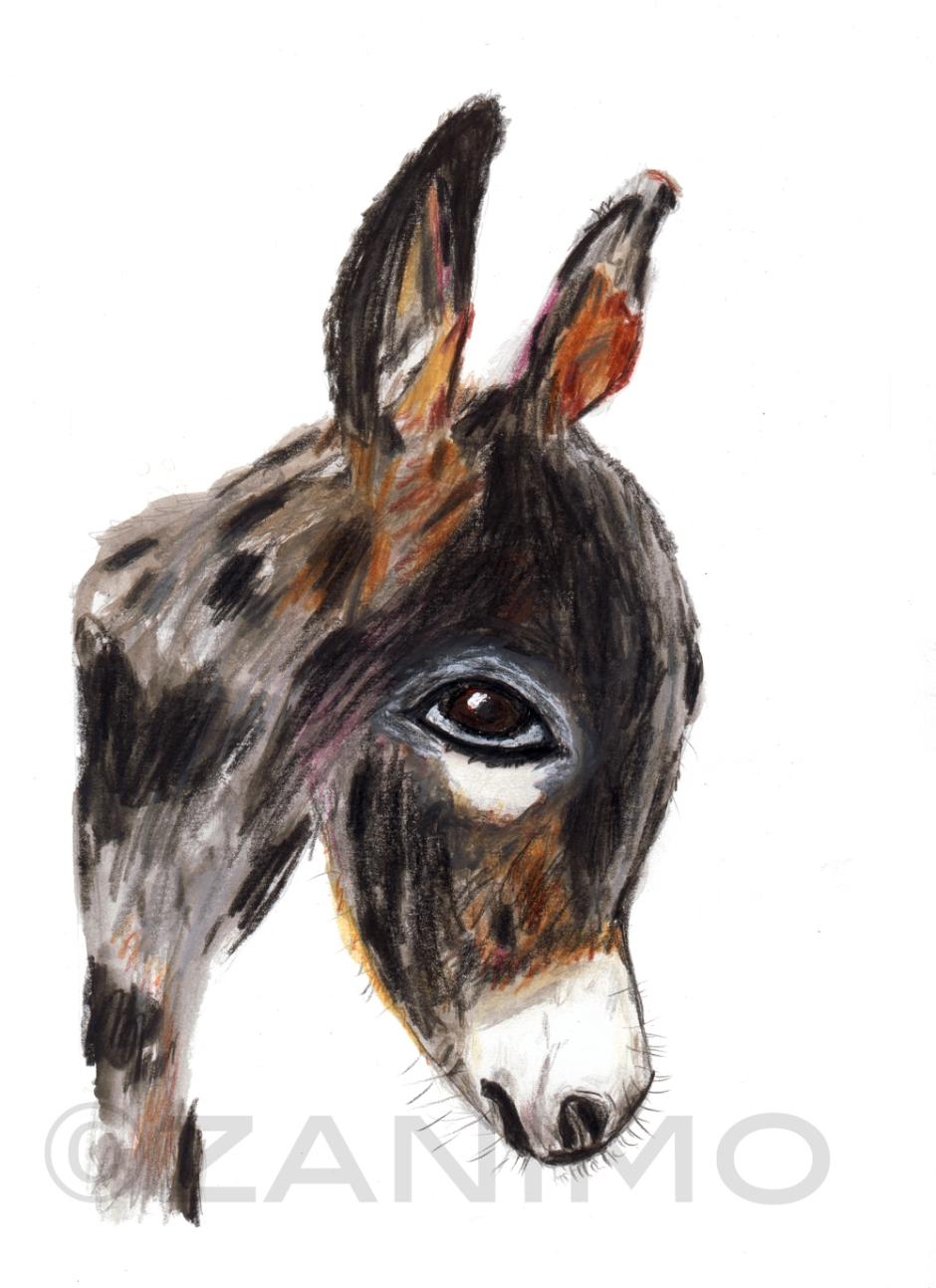 DonkeyWM